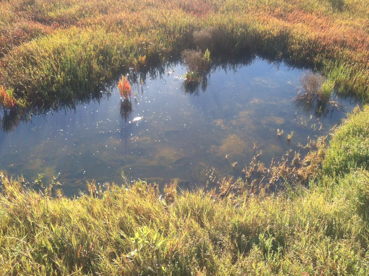 The Rich Marsh Habitat.