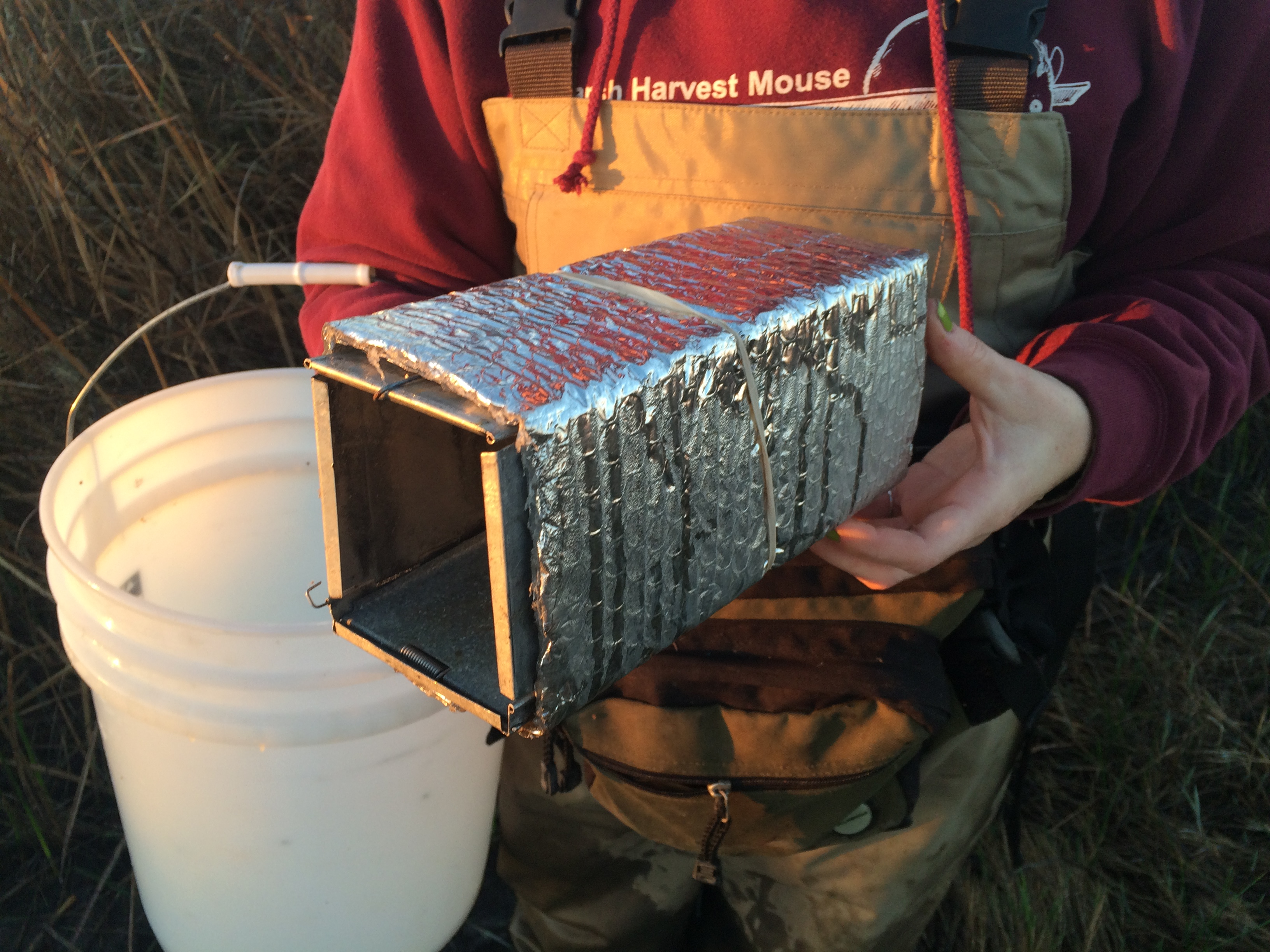 Special Box Used To Attract The Salt Marsh Harvest Mouse.
